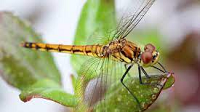 dragonfly-e1624644632980.png